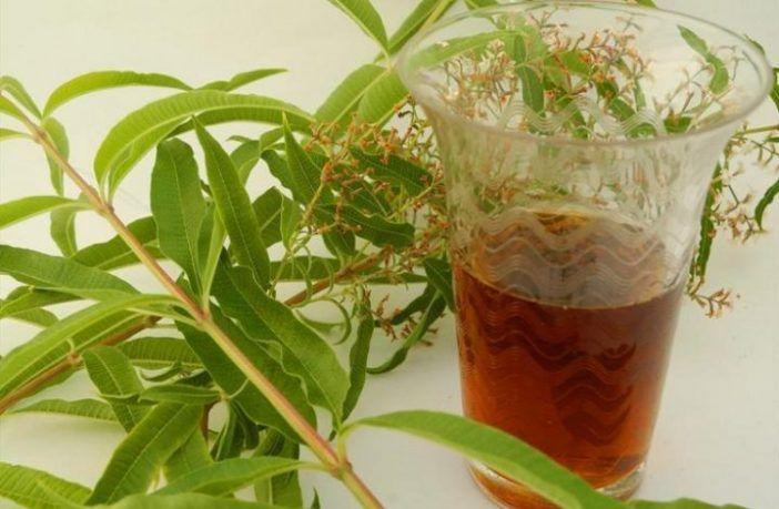 infusion de hierba luisa