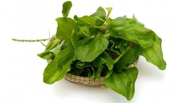 llanten planta medicinal