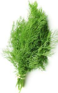 planta del hinojo