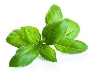 albahaca hojas