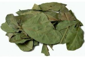 hojas de laurel