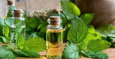 aceite esencial de melisa